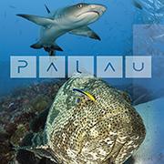 Palau Sportdiving 2011