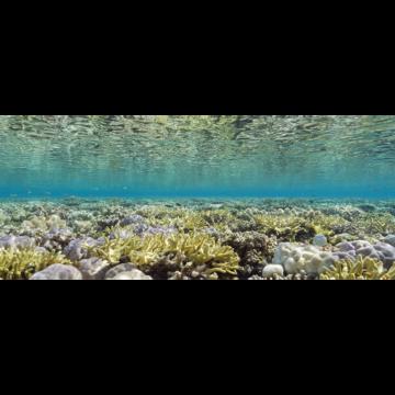 coralsea