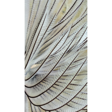 feathers2