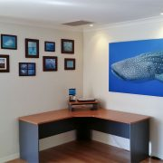 1.5m wide Whaleshark in home office space